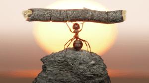 art-ant11d-300x169
