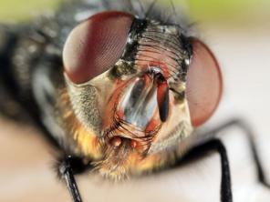 slide-mosca